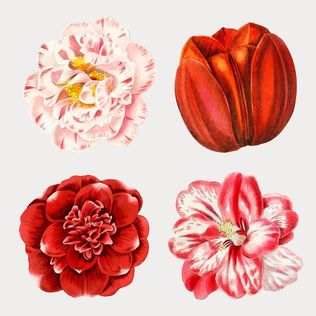 Ensemble de fleurs aquarelles