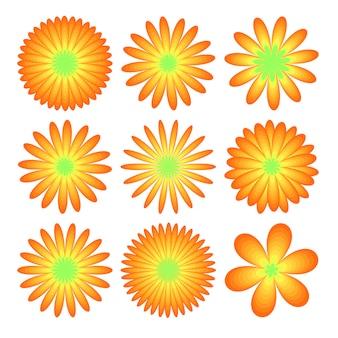 Ensemble de fleurs: asters réalistes, chrysanthèmes, pivoines isolées