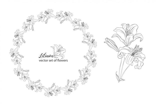 Ensemble de fleurs et de bourgeons de lys.