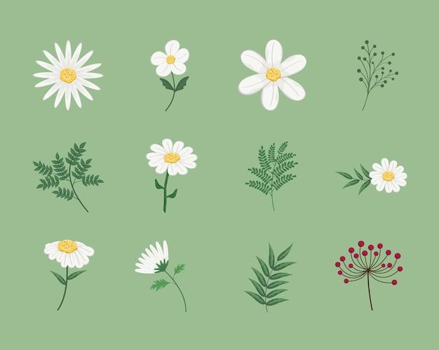 Ensemble de fleurs et de branches