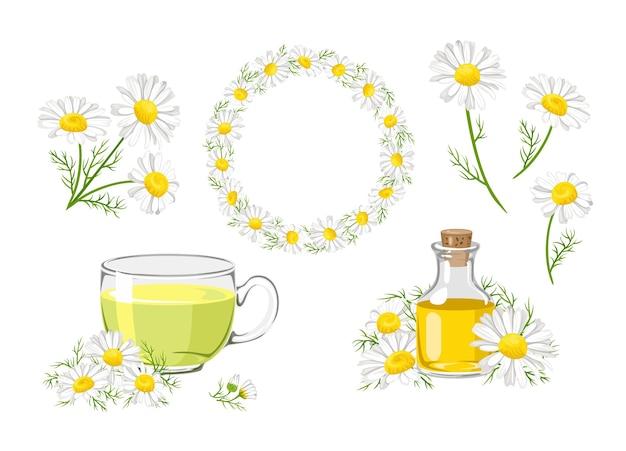 Ensemble de fleurs de camomille, bouquet, couronne, thé et huile.