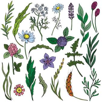 Ensemble de fleurs et herbes colorées dessinés à la main
