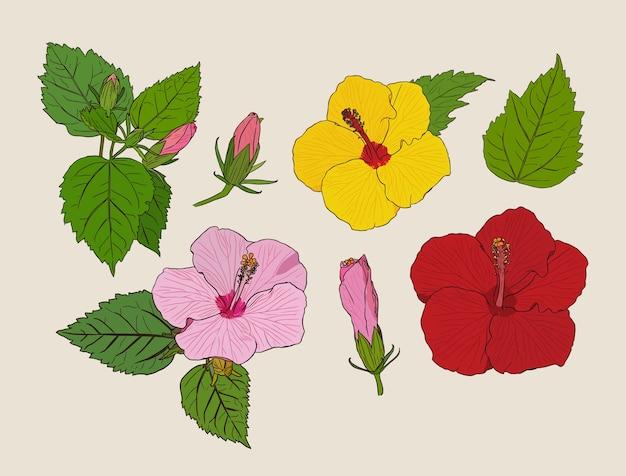 Ensemble de fleurs d'hibiscus.