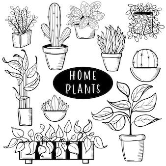 Ensemble de fleurs à la maison en pots
