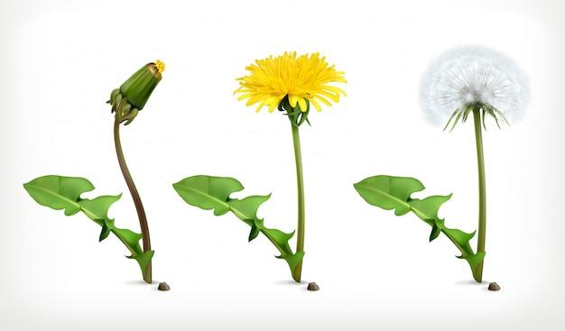 Ensemble de fleurs de pissenlit