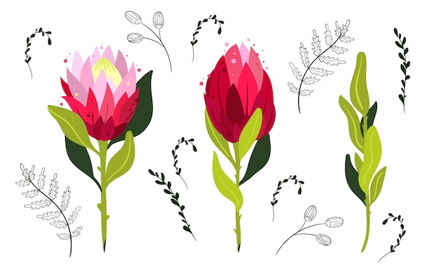 Ensemble de fleurs de protea colorées. élément de conception.