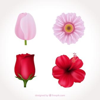 Ensemble de fleurs roses dans un style réaliste