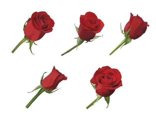 Ensemble de fleurs roses rouges