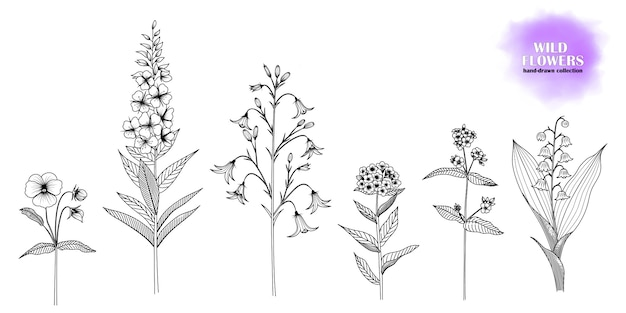 Ensemble de fleurs sauvages dessinées à la main.