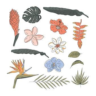 Ensemble de fleurs tropicales dessinées à la main de vecteur