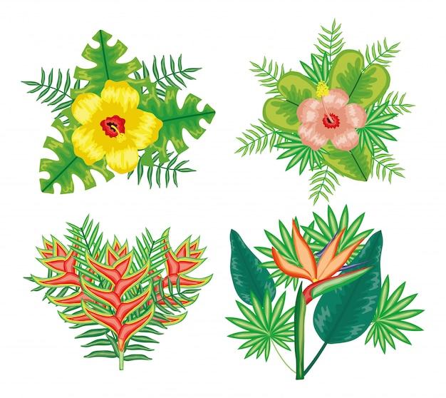 Ensemble de fleurs tropicales et feuilles des plantes