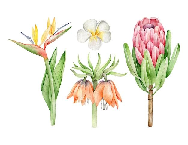 Ensemble de fleurs tropicales isolé sur blanc