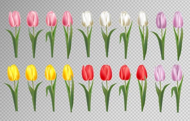 Ensemble de fleurs de tulipe