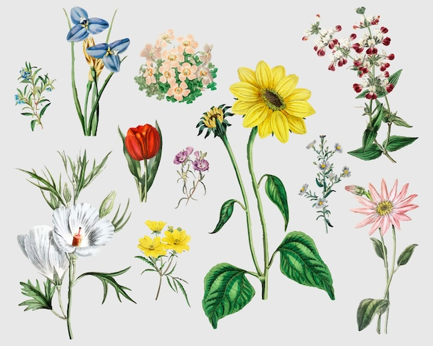 Ensemble de fleurs vintage