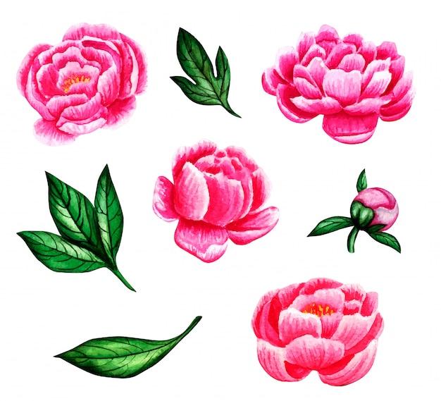 Ensemble floral aquarelle avec pivoines roses et feuilles vertes.