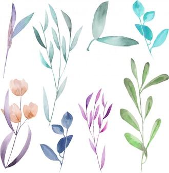 Ensemble floral avec des branches aquarelles isolées