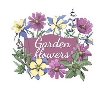 Ensemble floral. été et printemps fleurs et herbes de jardin isolés avec gaillarde, aquilegia, colombine, sauge, romarin.