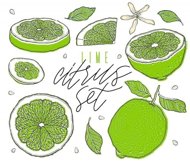 Ensemble de fruits de citron vert dessinés à la main. couper, trancher, moitié, entier. style vintage. scetch illustration.