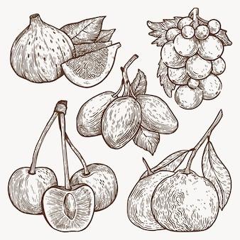 Ensemble de fruits contour dessiné à la main