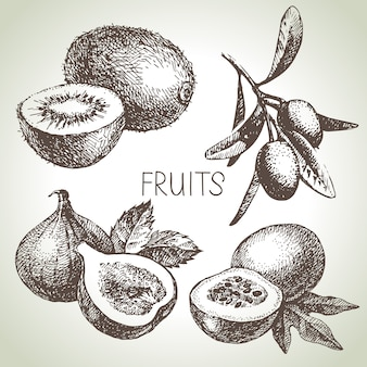 Ensemble de fruits croquis dessinés à la main. aliments écologiques. illustration
