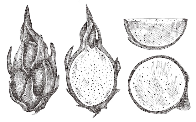 Ensemble de fruits du dragon, pitaya, pihaya. dessiné à la main.
