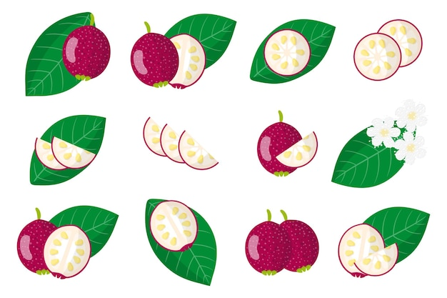Ensemble de fruits exotiques de goyave cattley isolé sur blanc
