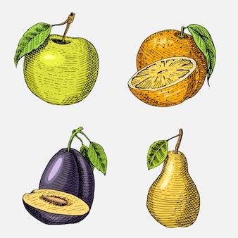 Ensemble de fruits frais dessinés à la main, gravés, nourriture végétarienne, plantes, pomme verte à la recherche vintage, orange et poire, prune.