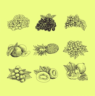 Ensemble de fruits illustration style dessinés à la main
