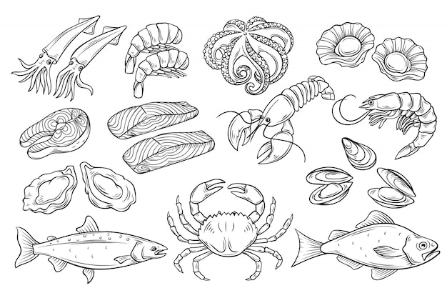Ensemble de fruits de mer dessinés à la main.