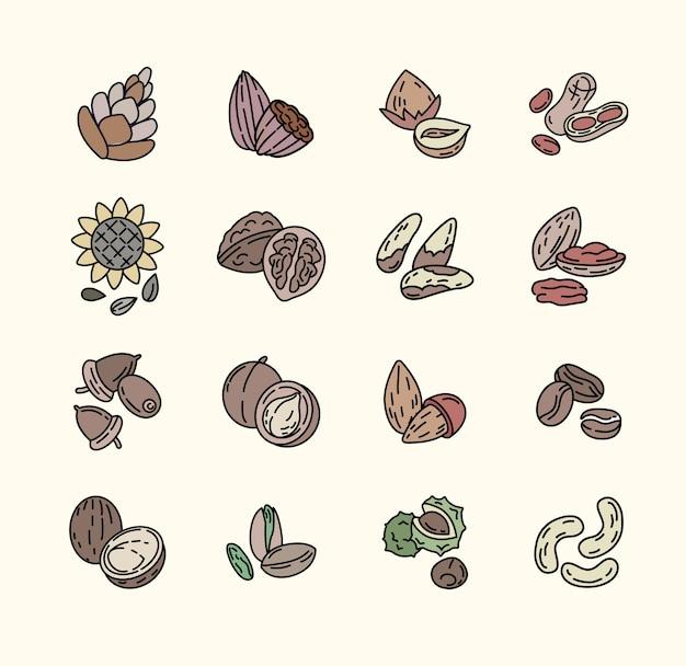 Ensemble de graines de noix ann. illustration plate de ligne