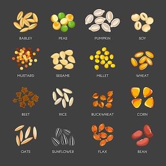 Ensemble de graines de plantes naturelles en petits tas