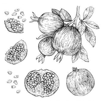 Ensemble de grenades dessinés à la main. croquis de la branche de fruits de grenade. illustration gravée à l'encre vintage de grenade coupée et tranchée avec des feuilles