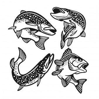 Ensemble de grosse basse, saumon, poisson de truite noir et blanc isolé