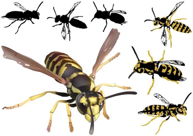 Ensemble de guêpes communes vespa vulgaris
