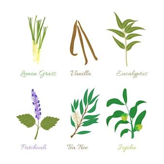 Ensemble d'herbes aux huiles essentielles design plat