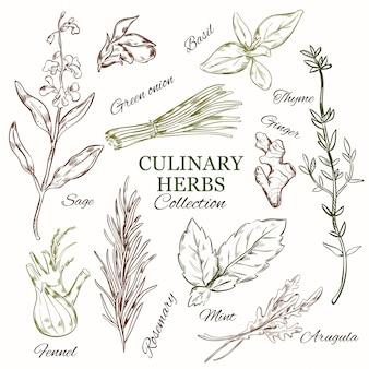 Ensemble d'herbes culinaires dessinées à la main
