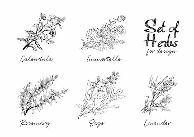 Ensemble d'herbes dessinées à la main