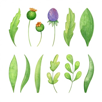 Ensemble d'herbes sauvages peint à la main à l'aquarelle
