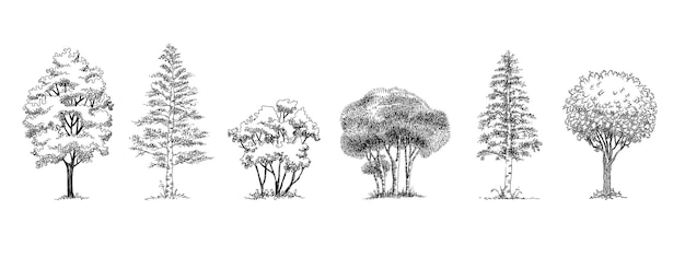 Ensemble d'icônes d'arbres du parc forestier. contours dessinés à la main ensemble d'arbres du parc forestier icônes vectorielles pour la conception web isolé sur fond blanc