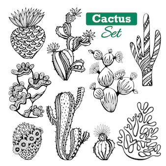 Ensemble d'icônes de cactus