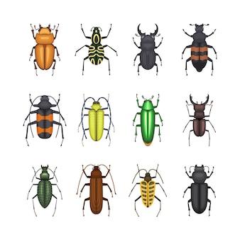 Ensemble d'icônes de coléoptères de couleur