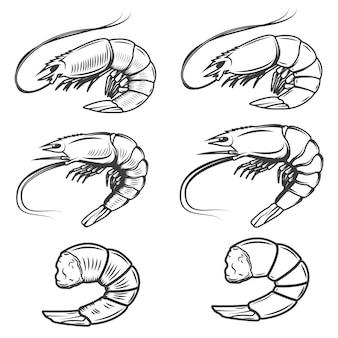 Ensemble d'icônes de crevettes sur fond blanc. fruit de mer. éléments pour logo, étiquette, emblème, signe, marque.