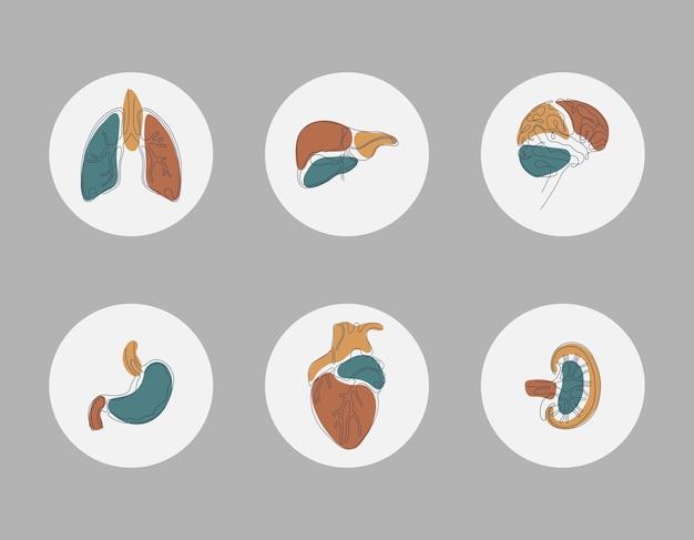 Ensemble d'icônes instagram d'organe interne de contour