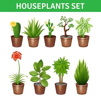 Ensemble d'icônes réalistes de plantes d'intérieur