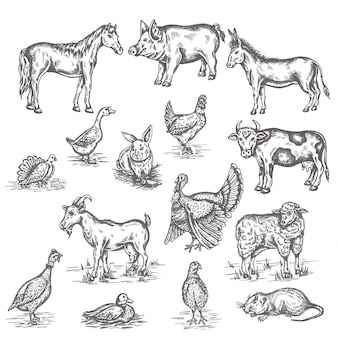 Ensemble d'illustration d'animaux de ferme