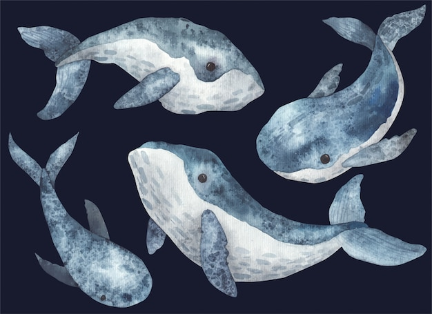 Ensemble d'illustration aquarelle de baleines sur fond blanc