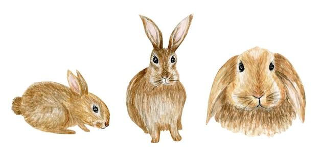 Ensemble d'illustration aquarelle lapin brun