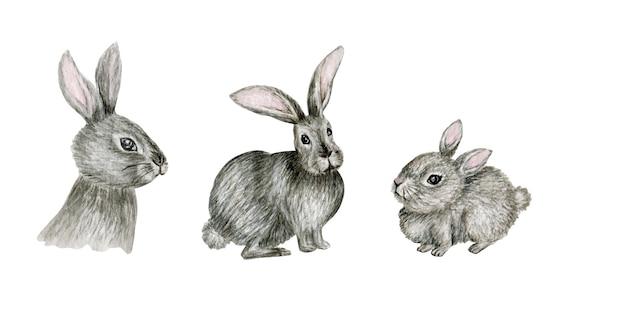Ensemble d'illustration aquarelle lapin gris