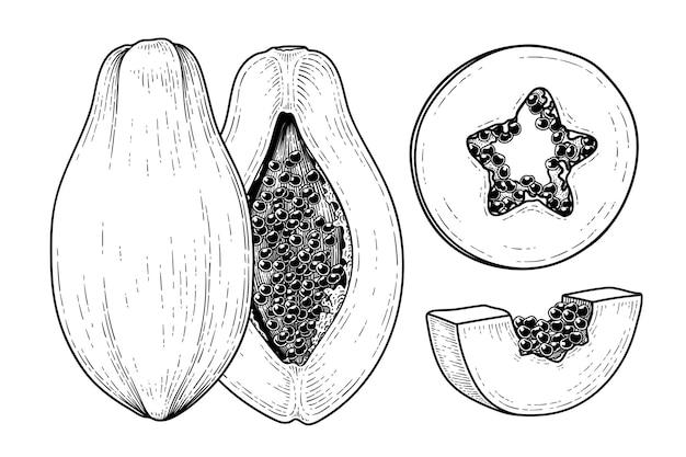 Ensemble d'illustration botanique d'éléments dessinés à la main de fruits de papaye