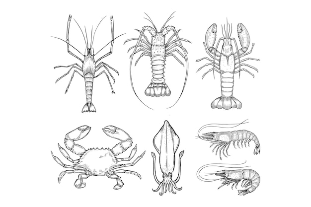 Ensemble d'illustration dessinés à la main de fruits de mer